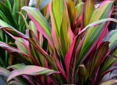 10 Best Tropical Plants for Your Patio - Sheridan Nurseries