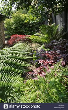 New zealand flax red garden of my dreams pinterest backyard overgrown corner of a london back garden featuring large evergreen stock photo royalty free altavistaventures Images
