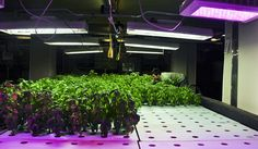 From Newark to Tokyo, large-scale indoor farms are being built in and around cities worldwide. Proponents argue they provide fresher crops to local consumers, while cutting transportation costs, carbon emissions and water use. But skeptics say they are not cost effective and consume too much energy. The pros and cons of indoor urban agriculture.