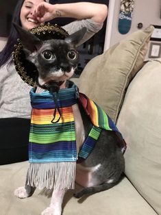 A friend got our cat a tiny poncho and sombrero for christmas and I can't handle it - pics Devon Rex, R Dogs, Sphynx Cat, Cute Cats, Fur Babies, Kittens, Cute Animals, Handle, Christmas