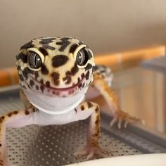 Les Reptiles, Cute Reptiles, Reptiles And Amphibians, Leopard Gecko Cute, Cute Gecko, Leopard Gecko Habitat, Animal Jokes, Funny Animal Videos, Cute Little Animals