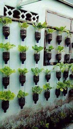No hay excusas. Todos a sembrar. Imagen tomada del tablero Gardening, en #Pinterest #AgriculturaUrbana #PlametaVerde #Recicla #Reciclaje #BotellasPlásticas #HuertoCasero