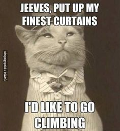 Jeeves...