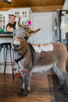 Tiny Tim the Mini Donkey ~ Happy Cinco de Mayo for those who celebrate :) Baby Donkey, Cute Donkey, Mini Donkey, Mini Pigs, Baby Cows, Farm Animals, Animals And Pets, Funny Animals, Super Cute Animals