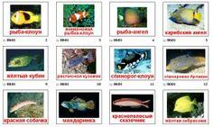 рыбы материалы для тематического занятия