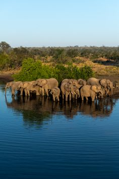 Photograph by Ross Couper Herd Of Elephants, Thick Skin, Camel, Wildlife, Hotels, Photograph, Animals, Photography, Animais