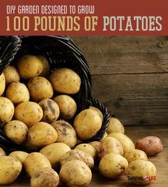 DIY Garden Design | Grow 100 Pounds Of Potatoes | Survival Life - Survival Life | Preppers | Survival Gear | Blog