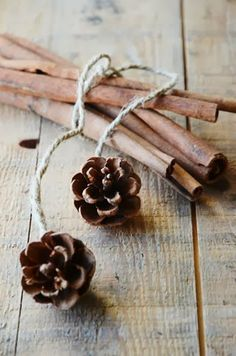 Cinnamon Sticks and pinecones would look great as a bow on a package!