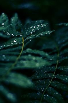 60 Ideas Nature Aesthetic Green Forest For 2019 Dark Green Aesthetic, Nature Aesthetic, Aesthetic Gif, Aesthetic Collage, Terra Verde, Foto Macro, Green Colors, Colours, The Ancient Magus Bride