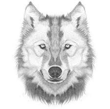 Image result for how to draw a wolf's face