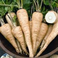 Cheap vegetable seeds, Buy Quality garden vegetable seeds directly from China garden vegetable Suppliers: All American Parsnip Seeds * 1 Grams Approx 200 Seeds * Pastinaca sativa * Biennial Garden Vegetable Seed Samen Herb Seeds, Garden Seeds, Blooming Plants, Root Vegetables, Types Of Soil, Companion Planting, Garden Supplies, Plant Care, Flower Pots