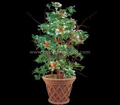 Bring the jungle in your garden with this 'thorny hedge' plant.