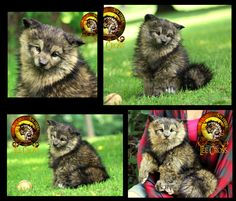 Sold Handmade Poseable Baby Timber Wolf Pup by Wood-Splitter-Lee.deviantart.com on @DeviantArt