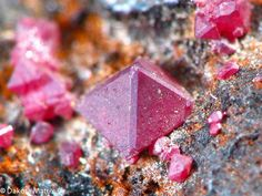 Cuprite, Cu2O, Gwennap, Cornwall, England. Deep red cubo-octahedral crystals of Cuprite to 2mm
