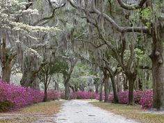 Savannah....always wanted to go there. Well, since I read Midnight in the Garden of Good and Evil.