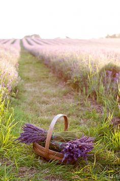 Someone has been picking lavender today. I hope ours is ready when we get home..............