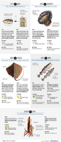 Fish that was similar and was difficult to distinguish, same fish and processing room .- 생김새가 닮아 구별이 어려웠던 생선, 같은 생선이나 가공방… The fish that looked similar and was difficult to distinguish … - Fun Cooking, Cooking Tips, Cooking Recipes, Healthy Recipes, Food N, Good Food, Food And Drink, Shellfish Recipes, Korean Food
