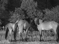 Southern Herd by ARW Triple S