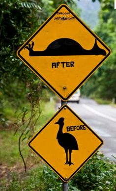 Daintree Forest, Australia