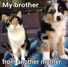 #dog #dogsofinstagram #dogs #dogoftheday #dogstagram #doglover...