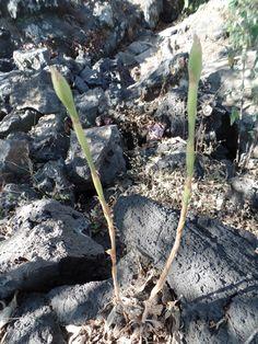 """""""Ver en el libre desarrollo de las plantas no una amenaza para un concepto cultural establecido, sino punto de partida para la redefinición del paisaje de la megalópolis."""" Peter Krieger en Lecciones inesperadas de Ciudad Universitaria y su reserva ecológica"""