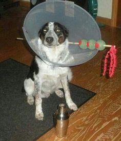 Hilarisch! Bijna jammer dat we geen hond hebben