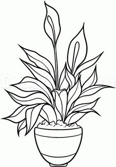 how to draw a peace plant, peace lily step 9 Lilies Drawing, Floral Drawing, Plant Sketches, Flower Sketches, Peace Plant, Lily Painting, Coloring Pages, Coloring Books, Drawing Templates