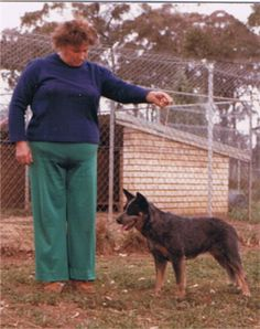 Dingo Lady: Berenice Walters, Australian Cattle Dog Breeder
