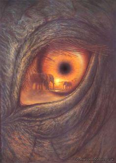 Through The Elephants Eye