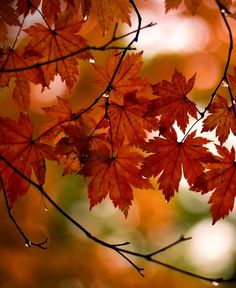 I love how it's focusing on the leaves but at the same time the branch. It makes a beautiful photo. Words: Leaves, Orange, trees, fall, autumn, branches, green, sky.