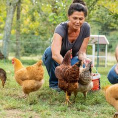 As you get started on the journey of raising backyard chickens, it's fun to look forward to the milestones you will celebrate with your flock. Read more to learn about the six important chicken growth stages. Feeding Program, Layer Chicken, Raising Backyard Chickens, Laying Hens, Chicken Feed, Baby Chicks, Flocking, Journey, Animals