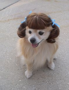 hah.  turns out dogs with wigs are funny.