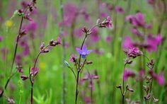 flowers_plants_spring_nature_purple_flowers_wildflowers-290618.jpg!d (1600×1000)