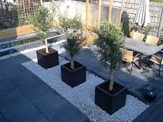 Contemporary back garden Back Garden Design, Modern Garden Design, Landscape Design, Outdoor Plants, Outdoor Gardens, Terrace Garden, Back Gardens, Garden Styles, Garden Inspiration