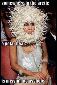 trou du cul d'ours polaire