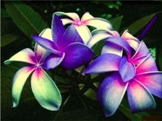 Tropical flowers!