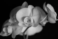 my favorite flower - orchids