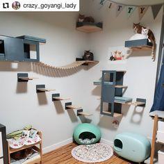 Cat Tree House, Cat House Diy, Cat Wall Furniture, Cat Wall Shelves, Outdoor Cat Enclosure, Diy Cat Tree, Cat Bedroom, Cat Playground, Animal Room