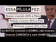 que PíLULA é essa?!..., que tá um arraso   Dr Lair Ribeiro - YouTube