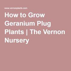 How to Grow Geranium Plug Plants | The Vernon Nursery