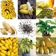 Rare Dwarf Banana Tree Seeds Mini Bonsai Fruit Exotic Home Garden Plants Banana Seeds, Banana Fruit, Banana Plants, Fruit Plants, Mini Plants, Potted Plants, Home Garden Plants, Fruit Garden, Garden Seeds