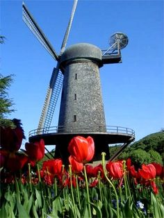 Wind Mill in Golden Gate Park, SF.I want to visit here one day.Please check out my website thanks. www.photopix.co.nz
