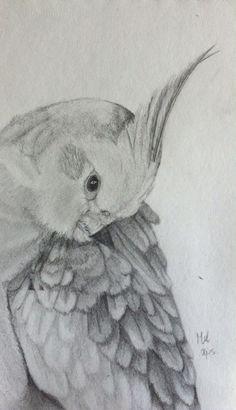 Valkparkiet, drawing a parkeet, bird, animal, huisdier, parkiet, vogel, potloodtekening, potlood, tekening, drawing l mariellevanleeuwen@live.nl l 2015-04-04 l
