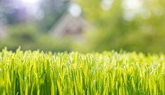 Find out what steps need to be taken to seed a new lawn. Using these tips can help you save money and be successful with your gardening endeavors.