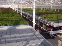 Ebb and Flow Greenhouse Benches, Flow, Sidewalk, Walkways, Pavement, Curb Appeal