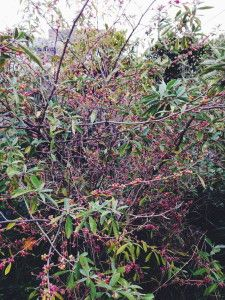 Autumn Olive, Plant Pictures, Growing Tree, Trees, Plants, Tree Structure, Plant, Wood, Planets