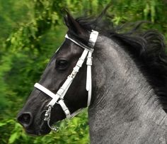 """WHITE HALTER BRIDLE HEADSTALL made from 3/4"""" Beta Biothane. Here is some more info on biothane. What is BioThane? What is the difference between Beta BioThane? BioThane has been around for more than 30 years!"""
