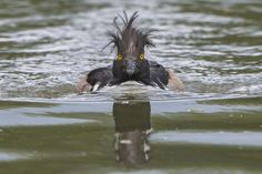 Michael Erwin / The Comedy Wildlife Photography Awards
