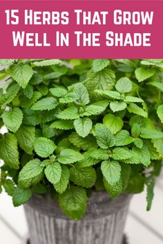 Grow one of these beautiful, fragrant and delicious herbs even in the shadiest of spots. Backyard Vegetable Gardens, Veg Garden, Garden Types, Edible Garden, Garden Landscaping, Outdoor Gardens, Container Gardening, Gardening Tips, Shade Garden Plants
