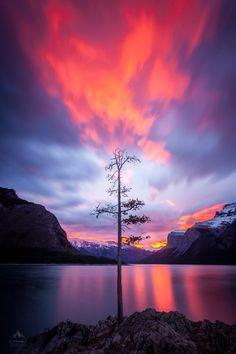 Lone tree, amazing sunrise, Lake Minnewanka (photo by Callum Snape)